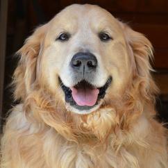dogs_0001_34774890371_274f0d985f_k